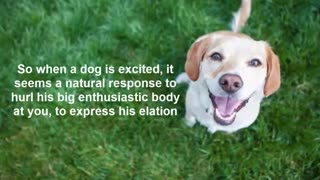 Secret to using your dog's natural intelligence