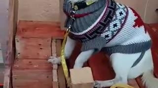 Shy dog at home 🏘️