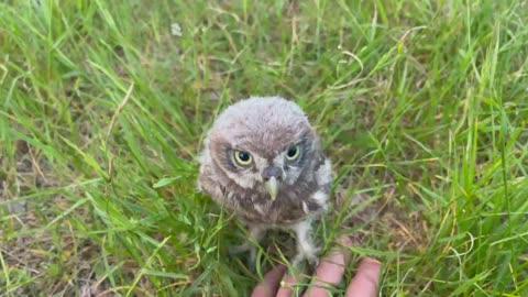 Run owl run