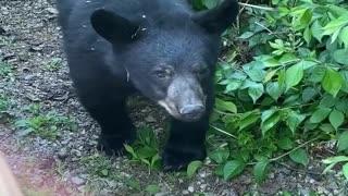 Cute Cubs Peek through Porch