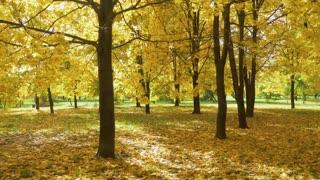 Violin in Autumn