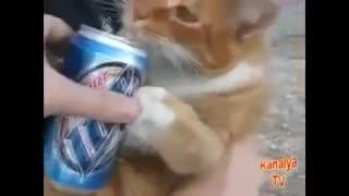 Animales borrachos video de animales graciosos