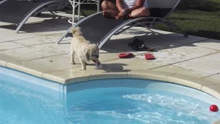 a dog falling into the water