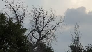 Birds on Trees at sunset