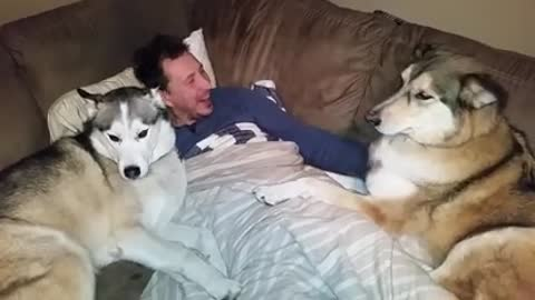 Silly Dog Gets Jealous And Demands More Attention