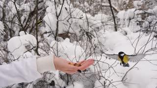 Woman feeding tit birds