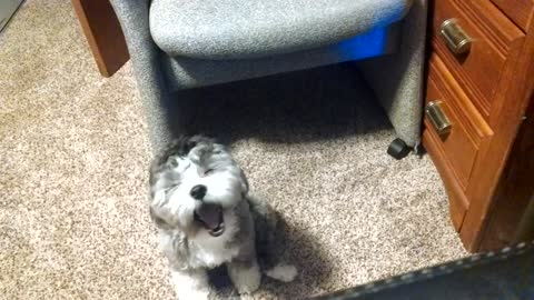 Puppy visits owner's office