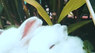 Very cute and lovely rabbits