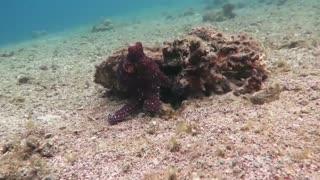Octopus changes color - HD video - Part 2