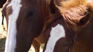 Lovely horses 02