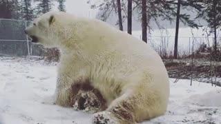Teddy bear having fun