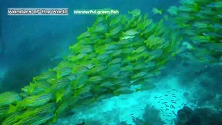 The wonderful green fish