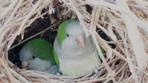 عشق الطيور