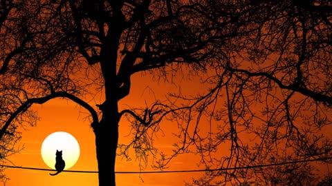 """Sunset"" - jazz"