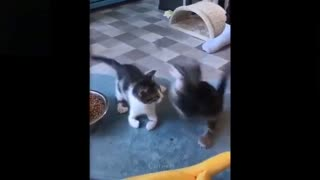 Cats video, funny cats video, animals video