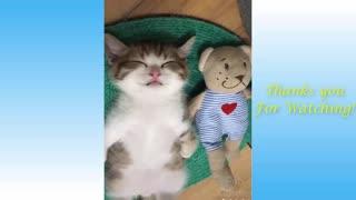Too Cute Video 1