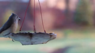 Birds and Feeder Royalty Free Footage