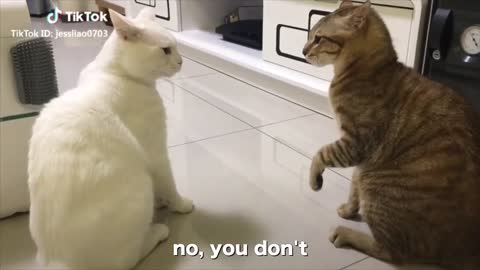 CATS TALKING, very funny