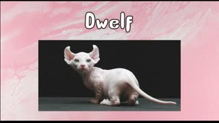 Every CAT BREED from (A-Z)
