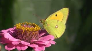 Wonderful butterfly What a beautiful butterfly