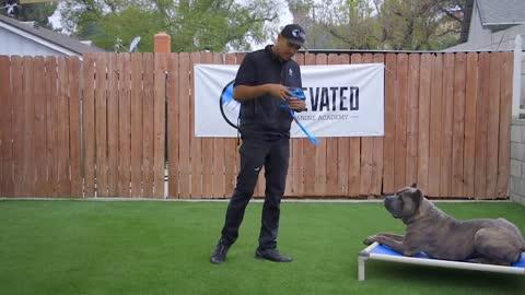 Lesson 1 Fundamentals in Dog Training