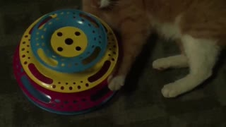My playful ginger cat