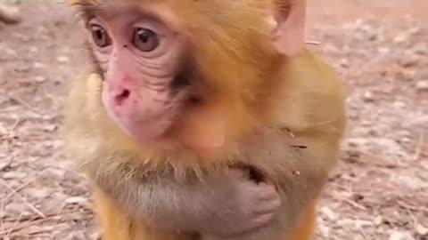 Chilling monkey baby
