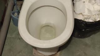 Rat Runs Away Into Toilet