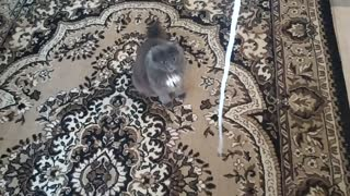 Play with funny cat