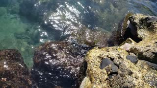 A Little Sea Turtle Feeding 2