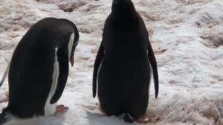 Penguin Argument
