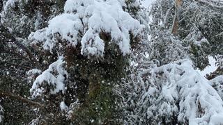 Spooky Snow Storm