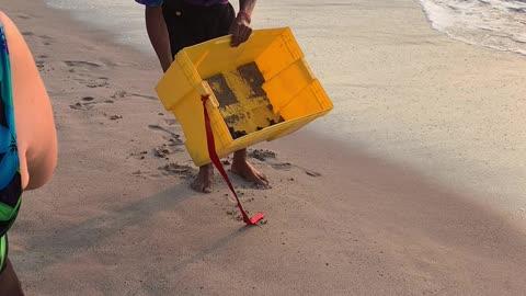 Baby turtles release in Puerto Vallarta