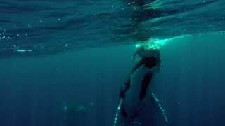 Exhilarating close swim with entire whale family