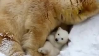 A bear and it's baby