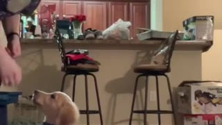 3-month-old puppy already knows variety of tricks