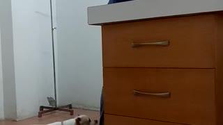 Dog Checks On Friend During Vet Visit