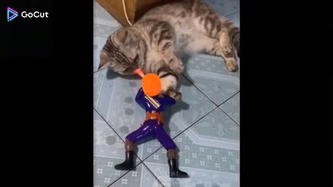 Very funny cat's video