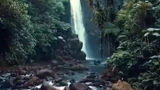 Nature - Life - Peace