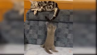funny cats Change your Miind