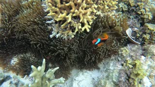 Coral reef fish swimming in clear sea water