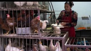 First human case of H10N3 bird flu