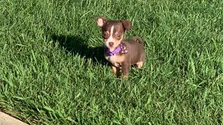 Puppy being cute