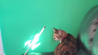Cat Tries To Catch Light