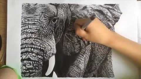 Amazing time-lapse drawing of elephant