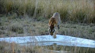 Bandhavgad Tiger Safari