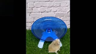 cutest and funniest pets, DO NOT LAUGH