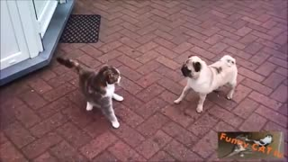 Dog Meets Cat For First Time Reaction