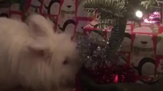 Bunny wants Christmas presents