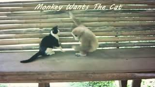 Monkey Wants The Cat !